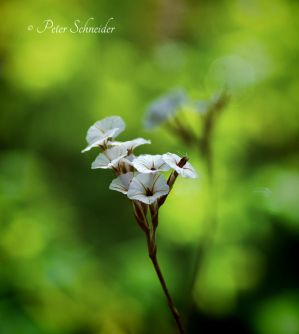 Miniature (III). by Phototubby