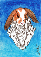 ACEO for TilaArt by Irsibil