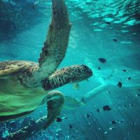 Sea Turtle close up by Natures-Studio