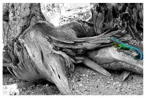 Lizard on Tree Roots by amyswerld