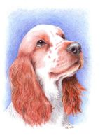Cocker spaniel portrait by asbolos