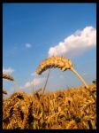 Fields of Gold I by Soul-Daemon