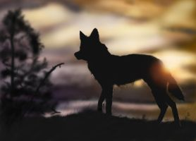 Sunset wolf silhouette colored by vulpyne