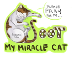 Soot, My Miracle Cat by staypee