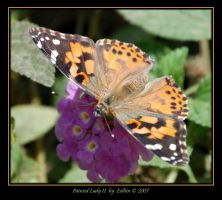 Painted Lady II 2226 by Eolhin