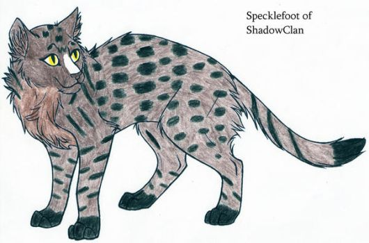 Specklefoot of Shadowclan by Seri-goyle