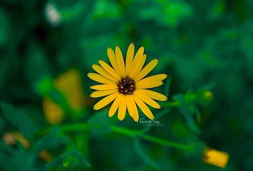 Yellow Beauty by ginavd