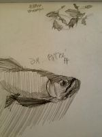 Fish, one more sketch from the Sea World by VLStone