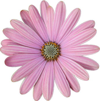 Pink Cut Flower 009 - HB593200 by hb593200