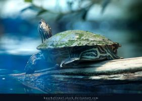 Turtle by kuschelirmel-stock