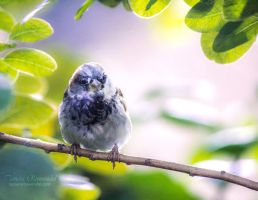 Sunshine sparrow by TammyPhotography