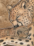 Momma Cheetah by MorRokko