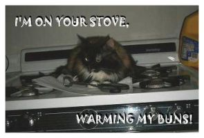 Stove Cat by DeviantLadyAshley