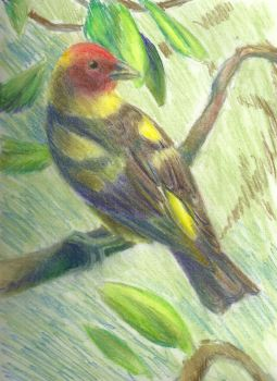 Western Tanager Pastel Sketch by Aki-rain