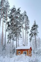 4.2.2015: Colour in the Middle of Winter by Suensyan