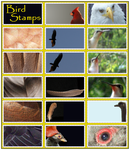 Bird- Stamp- Stock by Rainny-Stock