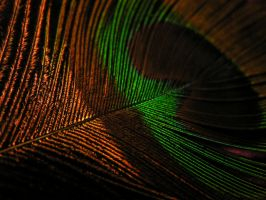 peacock by madamBesson