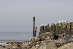Seagulls by TLO-Photography