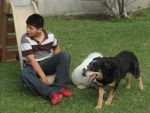 Nephew and Dogs 10 by Moongaze14