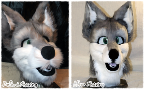 The Difference Shaving Makes on a Fursuit Head by Tsebresos