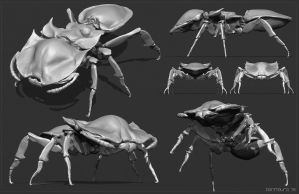 Warmup - Golden Turtle Ant study. by BenMauro