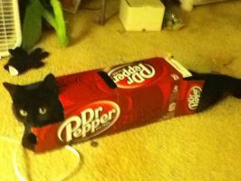 Dr Pepper Cat by buddy1o