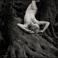 roots by draechlein