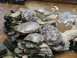 Terrapins by Roses-and-Feathers