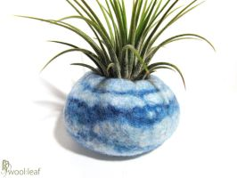 Felted Wool Air Plant Pod - Bay Series by KiriMothDesigns