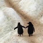 Hand in hand by mpoliza