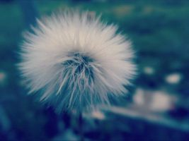 Dandelion by Conway999