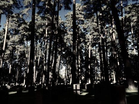 The Woodland Cemetery by TheThirdFate