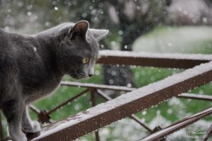 Amateur - Cat snow II by DianaLobriglio
