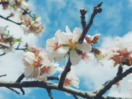 Blossom :) by JanuaryLOVER