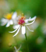 As summer retreats... by prettyflour
