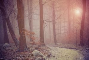 Fairy trees by ildiko-neer