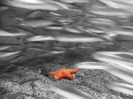 Starfish and the fish by Stolte33