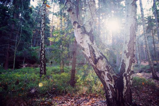 Morning in the sleepy forest by Luisa-Puschelova-7