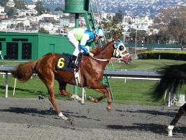 Golden Gate Fields - Racers 39 by Nyaorestock
