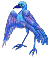 Cool Grackle by Goldquiver