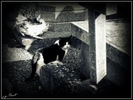 Cemetery's cat by kakobrutus