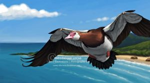 Spur-winged goose on the wing by namu-the-orca
