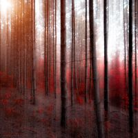 soul strings by ildiko-neer