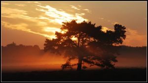 One more sunrise on the heath by jchanders