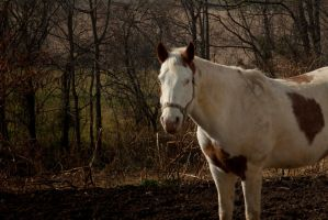 Blue Eyed Horse by PattiPix
