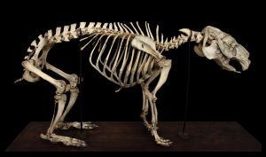 Skeleton capybaras by hontor