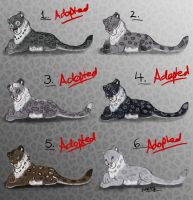 Cub Snow Leopard Female Point Adopts - Closed by Nala15