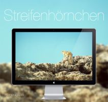 Streifenhoernchen HD Wallpaper by infernoragazzo