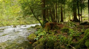 Forest and river Orbe 3 by ALP-Stock
