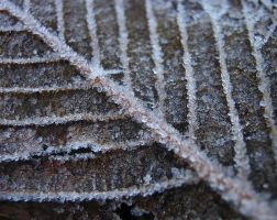 Frost Pinch III by Photopathica